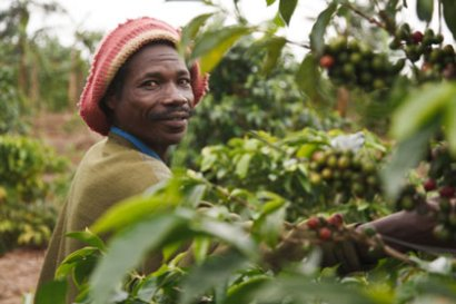 Farmers like the one pictured here benefit from Fairtrade&#039;s efforts (Photograph by Natalie Bertrams)